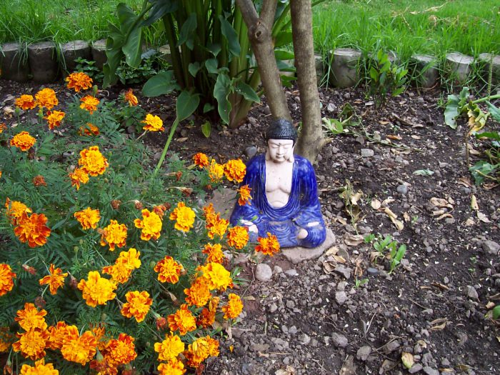 Buddha with marigold