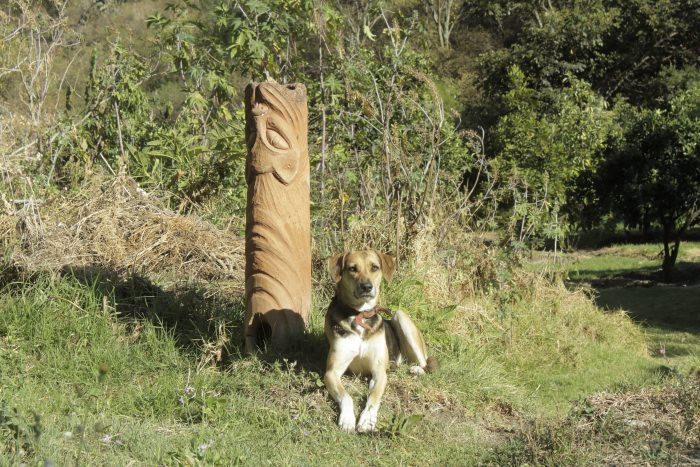 Our Dog Dolma - Andean Spirit Lodge
